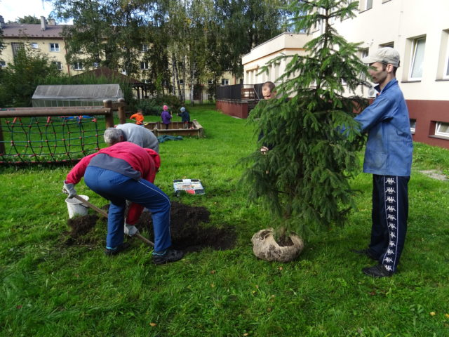 Výsadba okrasných stromů akeřů